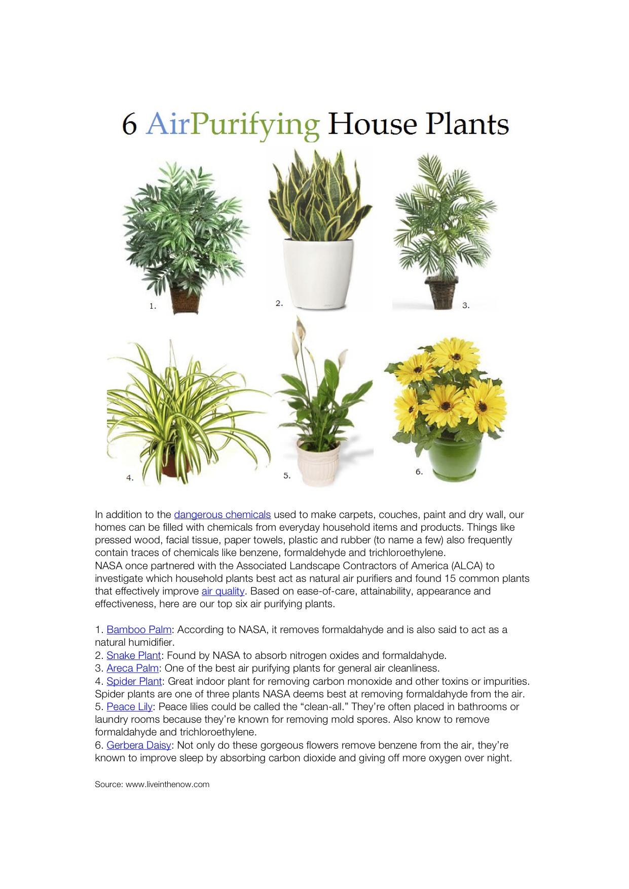 nasa air quality plants - photo #8