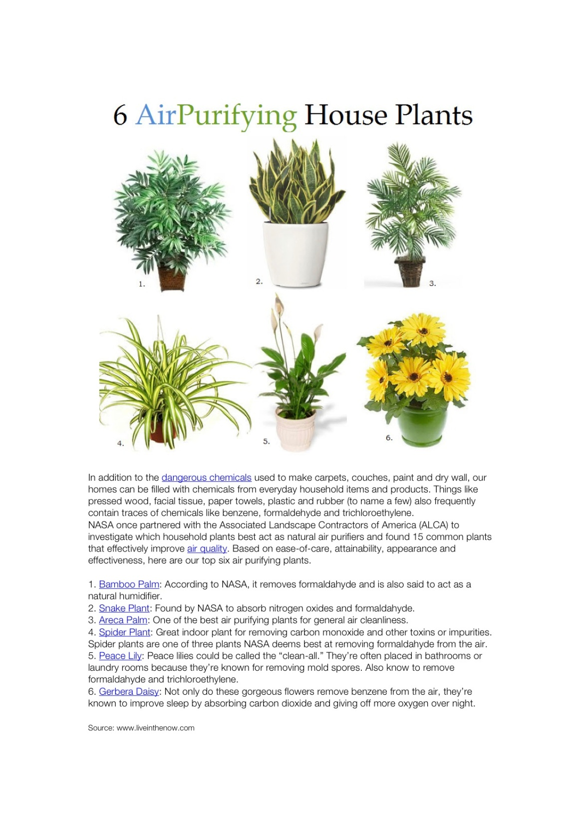 6 house plants that improve air quality according to nasa for Best plants to improve air quality